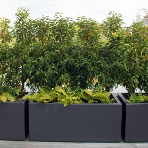 bacs-plantes-toiture