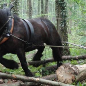4-4-4_chevaux